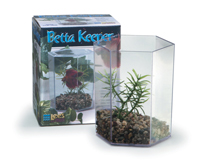 Betta Hex Tank with lid, gravel and plant - 36oz