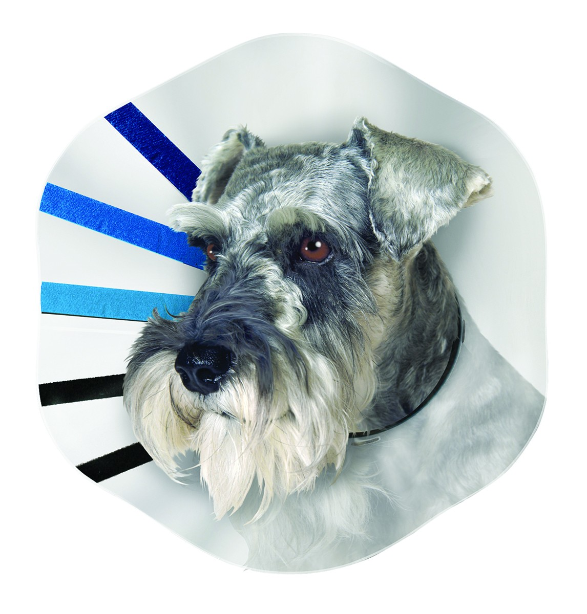 """E-Collar Fits 14-21"""" - Extra Large"""