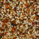 AFRICAN CICHLID MIX