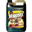 Molasses  1 gal