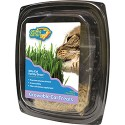 COSMIC KITTY CAT FAMILY GRASS