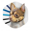 """E-Collar Fits 12-14"""" - Large"""