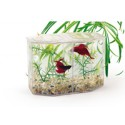 Dual Betta Hex with lid, gravel, and plant - 12oz
