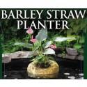 BARLEY STRAW PLANTER