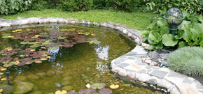 Pond and Garden